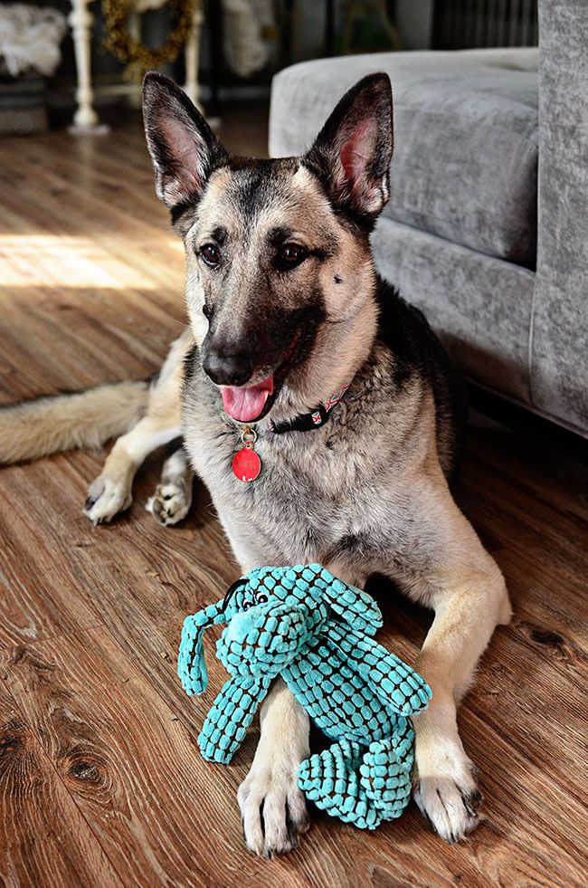 Don't forget your furry friends when gift shopping.  #treasuredgift Dog Toys $4.99 at Tuesday Morning.  Compare to $9.99 at other retailers