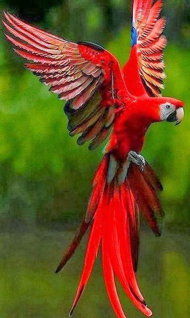 Parrot red bird Boke Amazing World