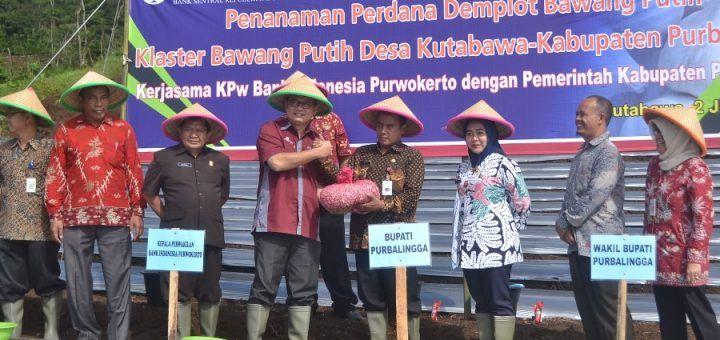 BI Inisiasi Demplot Bawang Putih di Desa Kutabawa