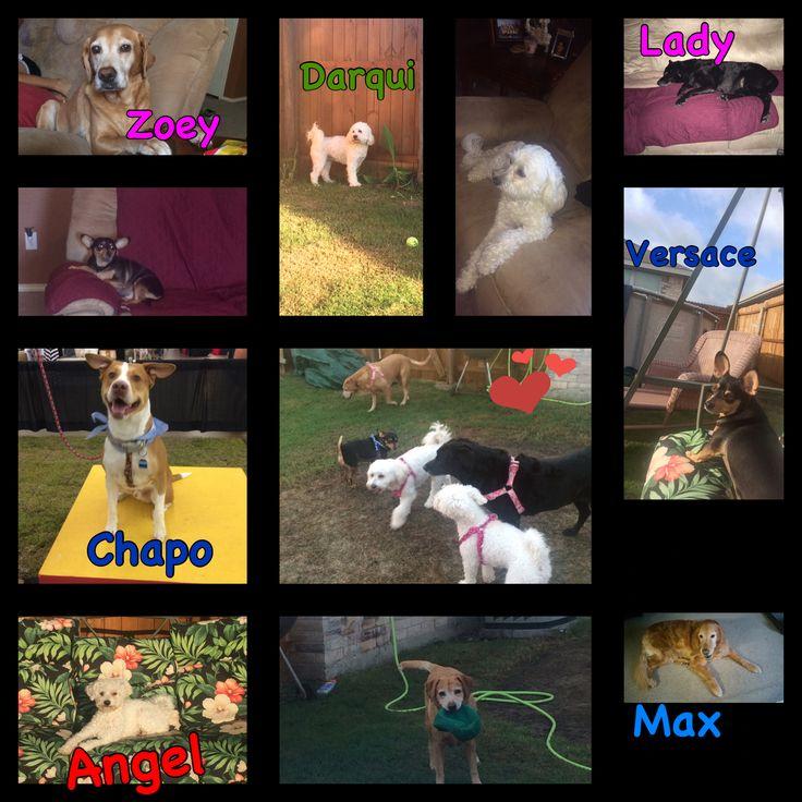 🐶Happy National Dog Day💗💙 Feliz Dia Nacional de Los Perritos 💙💗