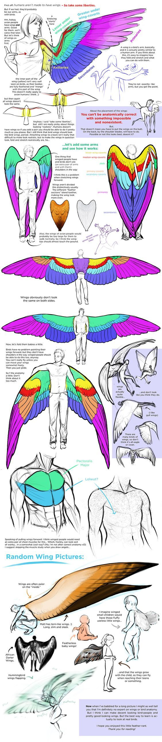 This is a good explaination of the correct anatomy of wings on people. Technically, winged people shouldn't have arms.: