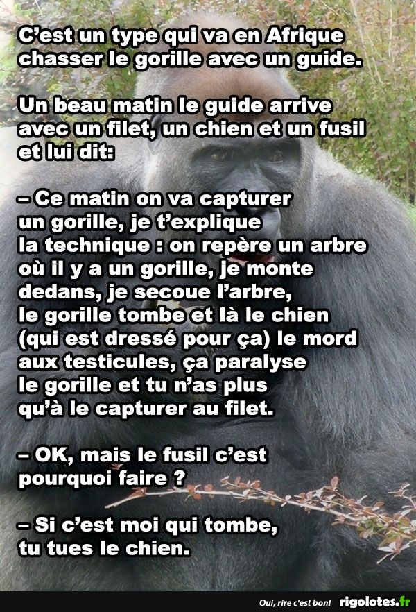 Attention! Gorilla! - RIGOLOTES.fr