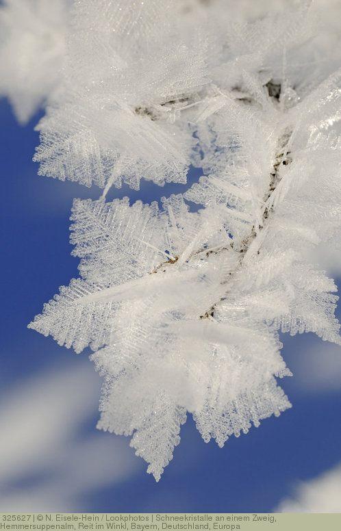 Schneekristalle an einem Zweig, Hemmersuppenalm, Reit im Winkl, Bayern, Deutschland, Europa