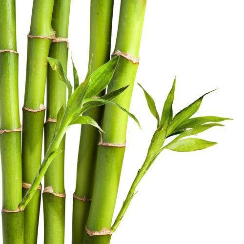 Benefícios do Bambu 3