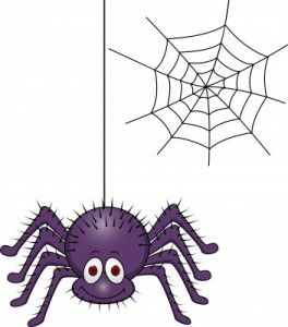 Best 25 Keep Spiders Away Ideas On Pinterest  Insect Repellent Captivating How To Get Rid Of Spiders In Bedroom Decorating Inspiration