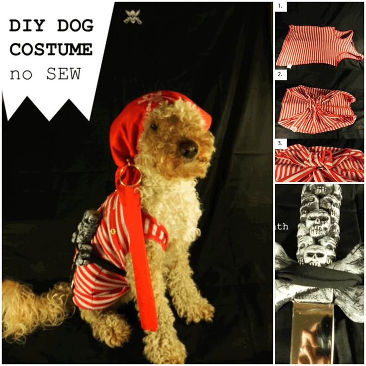 DIY No-sew Dog Pirate Costume