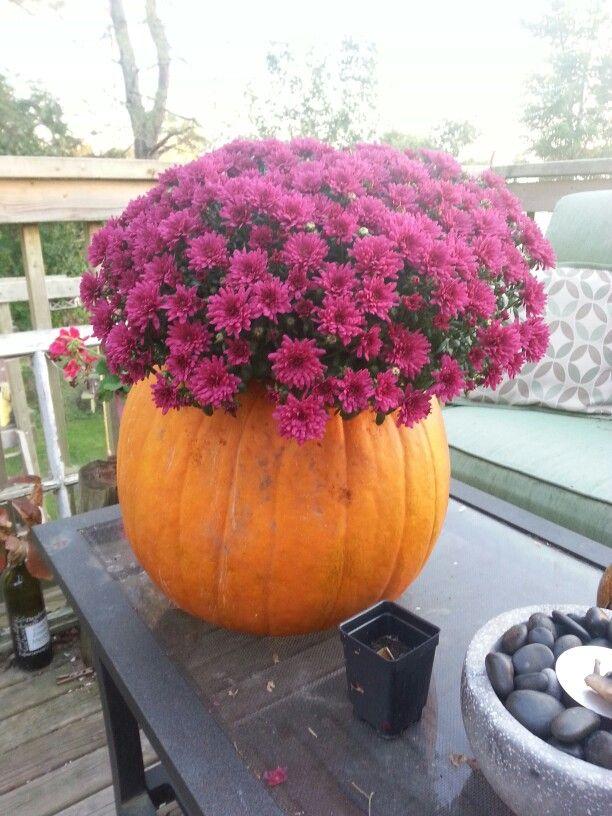 Fall pumpkin planter!!