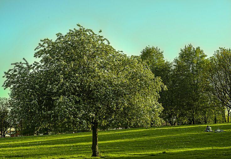 Lovers in the park by Jakub Hajost on 500px