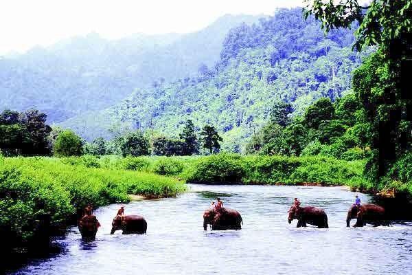 Chiang Rai Elephant Trekking
