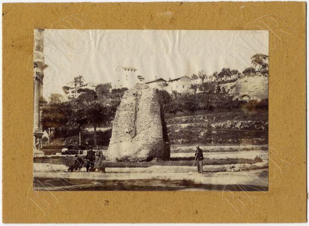 Meta Sudans 1860
