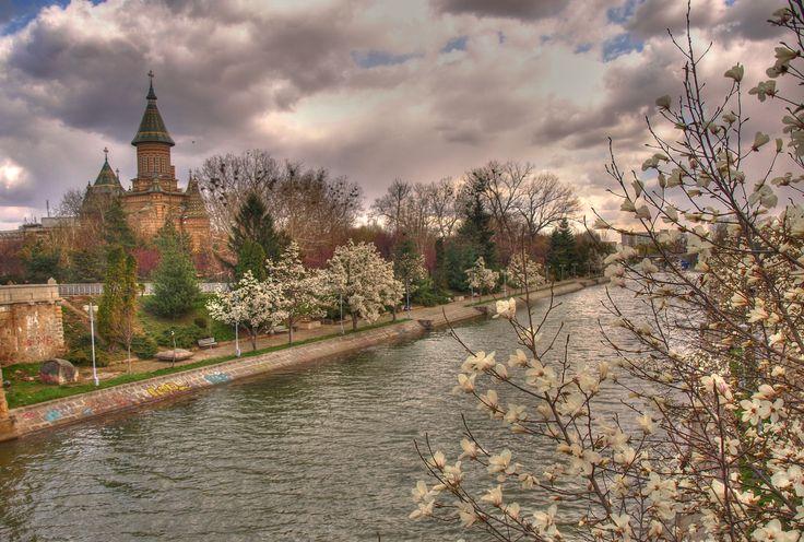 Spring in Timisoara