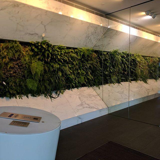 #fytogreenaustralia #fytogreen #architecturemagazine #architecture #verticalgarden #victoria #hydroponics #sustainability #melbourne #plant #plantsofinstagram #plantsonwalls #greenwall #indoorgarden #urbanjungle #elmapartments