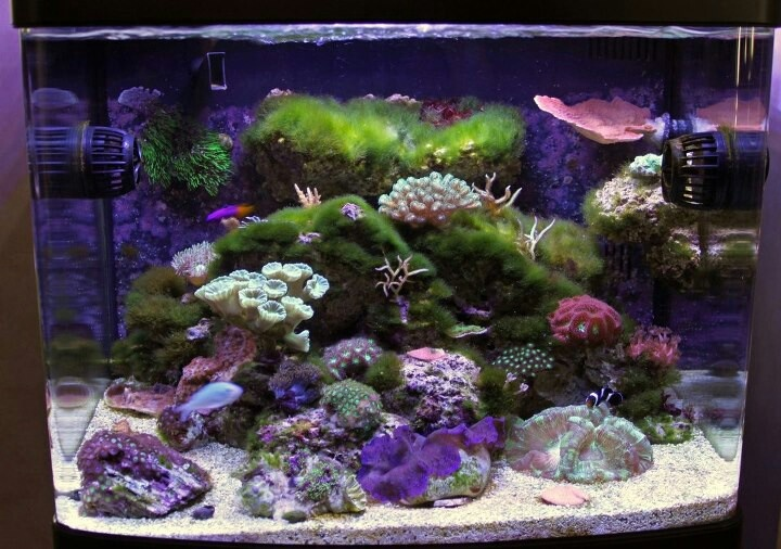 17 best images about fish tank therapy on pinterest for Fish tank full movie