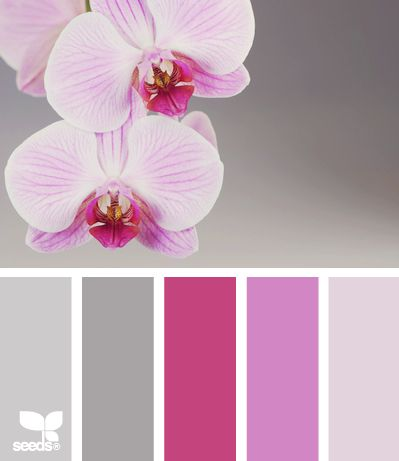 orchid tones -- kind of. I like the greys with the pinks. but maybe instead of a purplish tone we go towards a teal? @Kristina Kilmer Kilmer Kilmer Kilmer Brewer