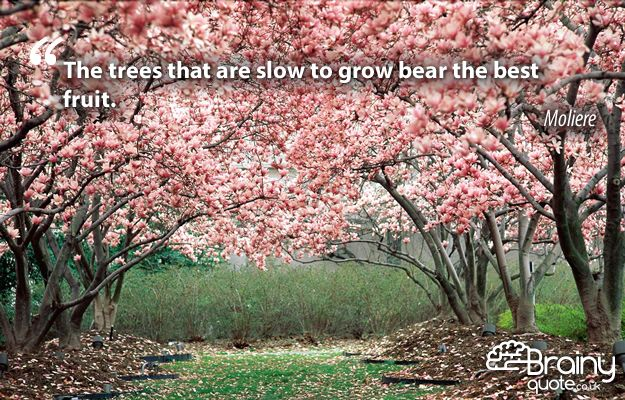 The trees that are slow to grow bear the best fruit. – Moliere