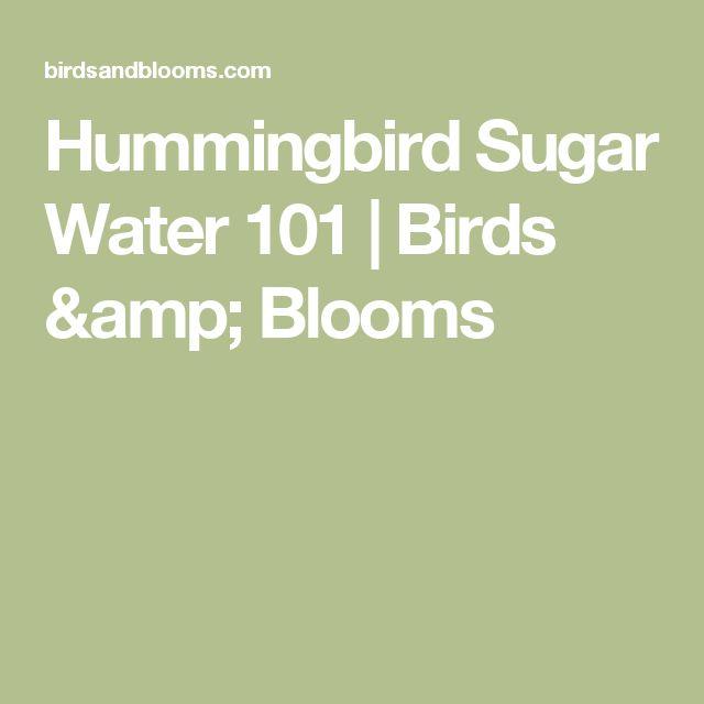 Hummingbird Sugar Water 101 | Birds & Blooms