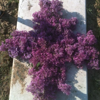 Grave blanket I want to make for my dad out of chicken wire and lilacs