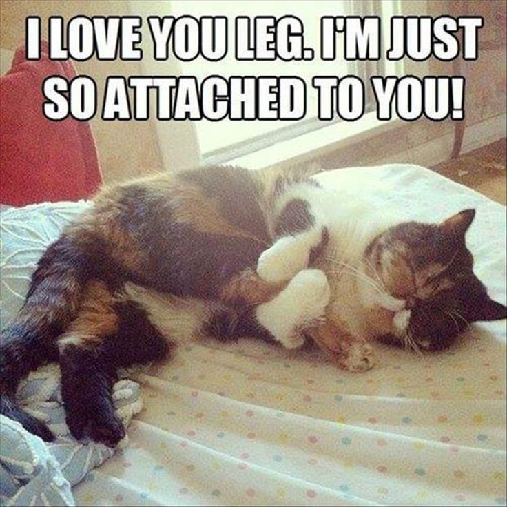 Best Funny Cat Memes Images On Pinterest Funny Animals - 18 hilarious sad cat problems that might explain why your cats so moody