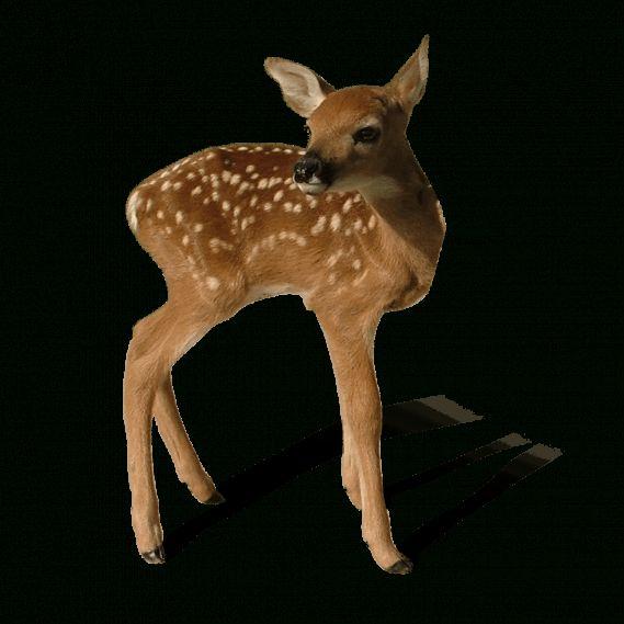 15 Baby Deer Png Baby Deer Deer Cartoon Deer