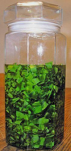 Bärlauch - Öl, ein raffiniertes Rezept aus der Kategorie Frühling. Bewertungen: 8. Durchschnitt: Ø 3,6.