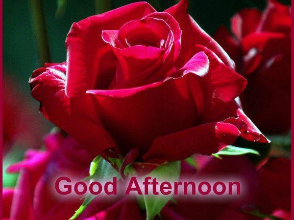 80 best Good Day, Good Afternoon... images on Pinterest Good Afternoon Images With Roses