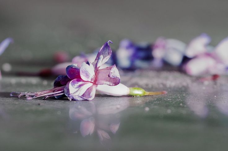 Flowers on the floor by Rob Janssen on 500px