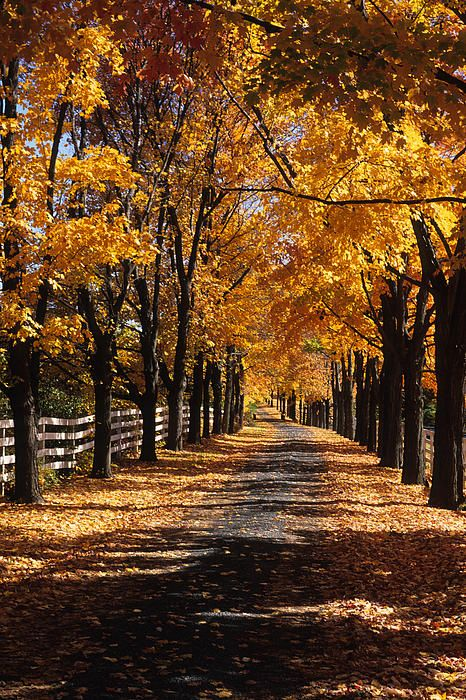 Someday I will have a Tree-lined driveway