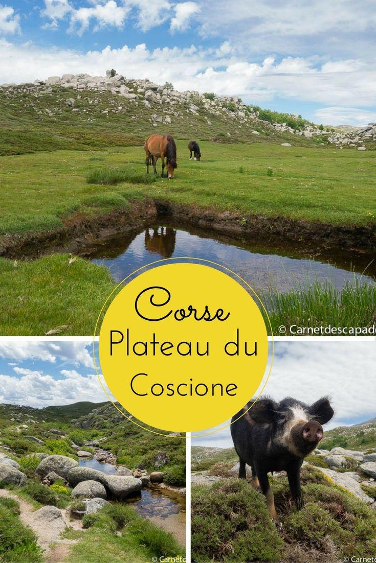 Idée de randonnée dans les montagnes Corse: le plateau du Coscione et ses célèbres peaufinés, sur les hauteurs du village de Quenza. Juste magnifique!