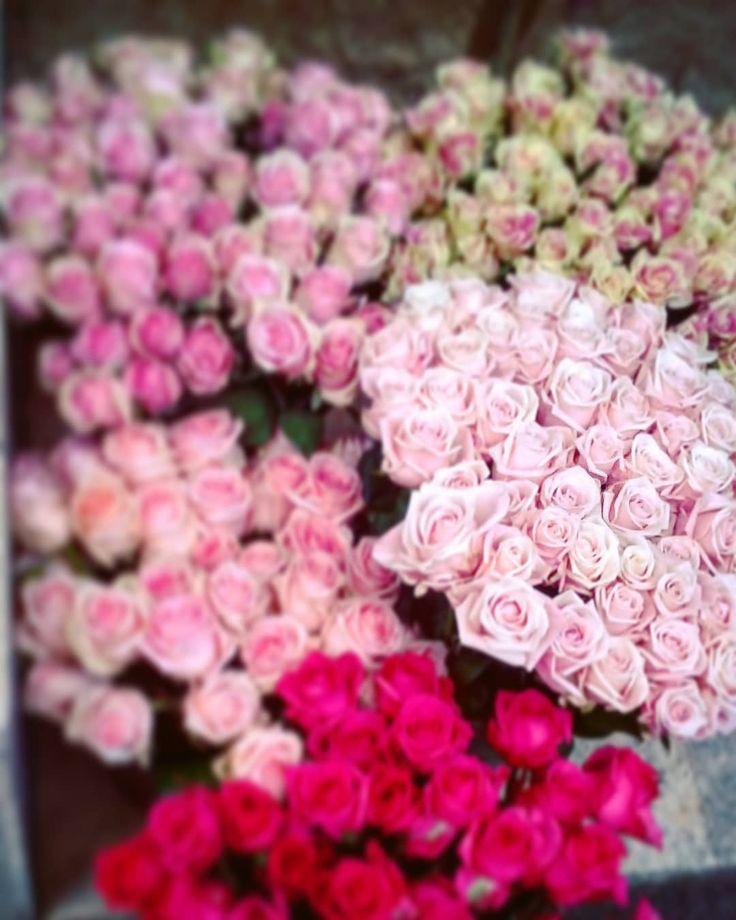"""14 aprecieri, 1 comentarii - Floraria Dorothy's (@florariadorothys) pe Instagram: """"Fifty shades of pink... #roses #cluj #clujnapoca #clujlife #viataincluj #clujcenter #lifeincluj…"""""""