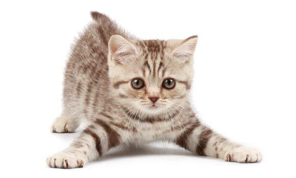 Un Gattino carino