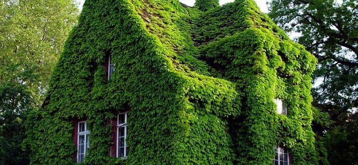 Зеленая кровля (green roof) – вид кровель, на поверхности которых высажен газон, деревья, кустарники, что позволяет организовать дополнительные зеленые зоны на ограниченной площади небольшого участка. Такая кровля отличается прекрасной тепло-звуко изоляцией плюс, почвенный слой удерживает часть дождевой и талой воды, что уменьшает нагрузку на конструкцию дома и систему отвода  воды. В таком доме всегда тихо и комфортно.