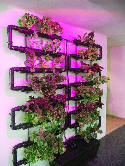 Todo para Hidroponia y para cultivar tu mismo | HidroponiaUrbana.mx