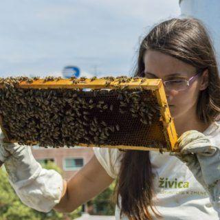 Na sídliskách číha na včely menej nebezpečenstiev než na poliach. Vykosený zelený trávnik s tujami je mŕtvou púšťou. Život je tam, kde panuje divočina. No