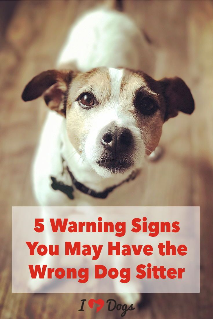 5 Warning Signs You May Have The Wrong Dog Sitter Dogs Your Dog