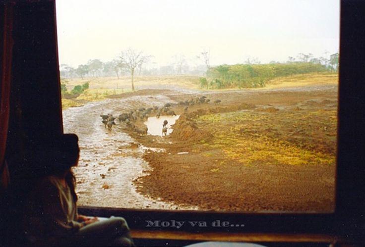 Allí nadie duerme! Un hotel construido en los árboles. #Molyvade...#viaje #África #Kenia #Treetops #Aberdare #molyvade.blogspot.com