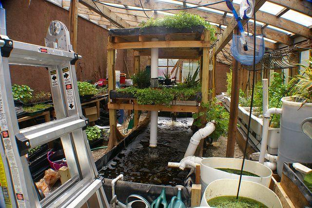 Fun aquaponics set up aquaponics pinterest posts for Balcony aquaponics