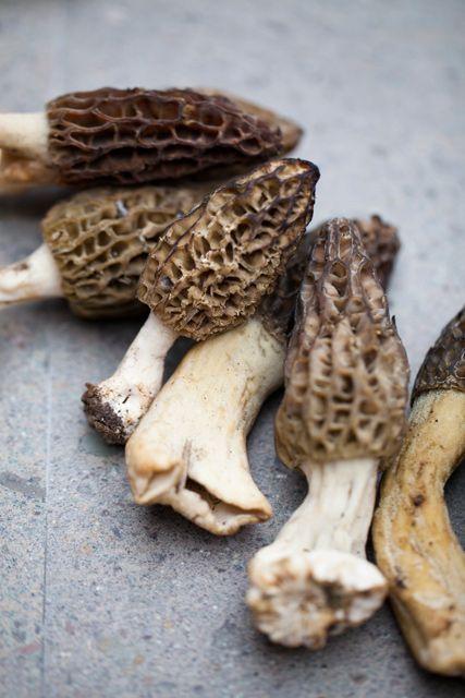 17 best images about mushrooms on pinterest for Morel mushroom recipes food network