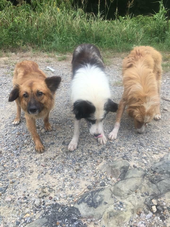 Five dogs have been dumped in a rural area near Pearcy and