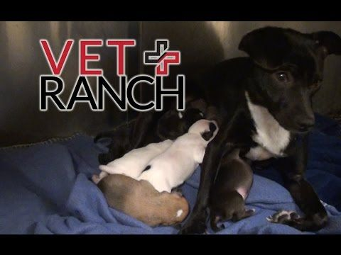 Expectant Mami Doggie Rescued Minutes Before Euthanasia! - http://www.dogisto.com/expectant-mami-doggie-rescued-minutes-before-euthanasia/