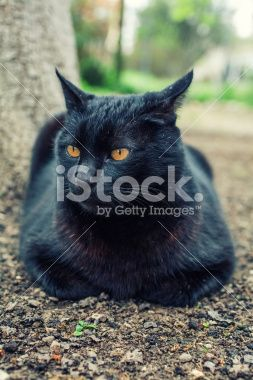 Black cat reasting in a yard under a tree