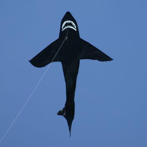 Drak Shark