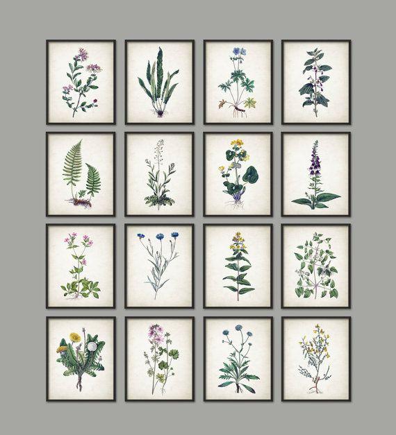 Wild Flower Print Set of 16  Vintage Flower by QuantumPrints