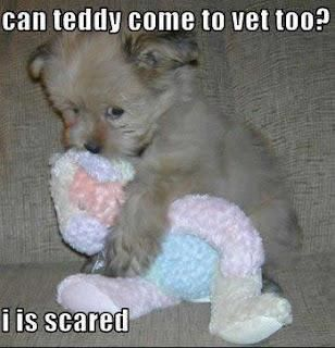 can teddy come to vet too? i is scared