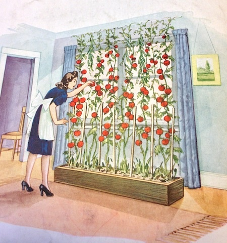 Vintage image from WW2 Victory Garden pamphlet about indoor gardening over  the winter. theyarden. - Best 25+ Victory Garden Ideas On Pinterest Victory Definition