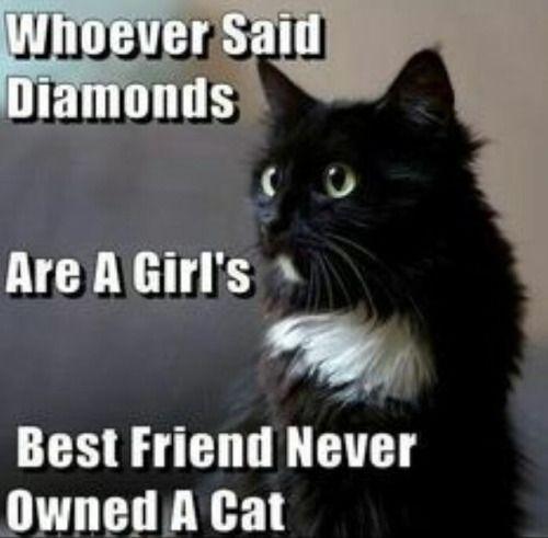 Funny Cat Lady Meme : Best images about crazy cat lady on pinterest cats