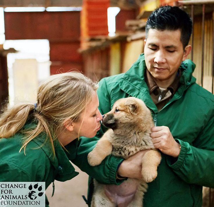 A kiskutyák megmenekültek hála a Change for Animals Alapítványnak  #kutya #dog #korea #changeforanimals #kutyabaráthelyek