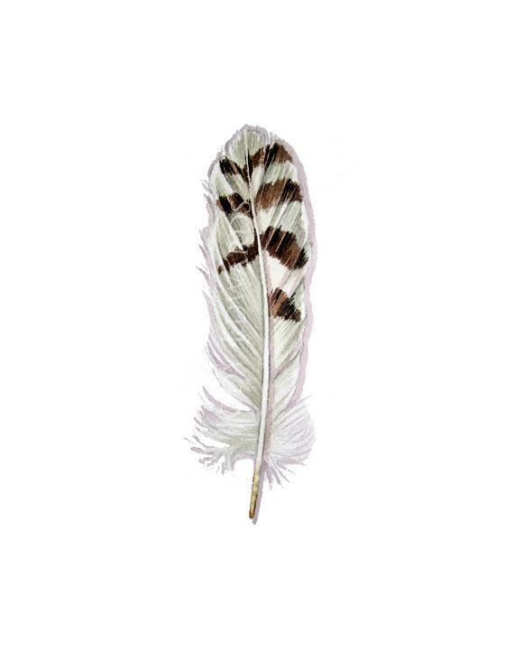Owl feather watercolor  Snowy Owl feather