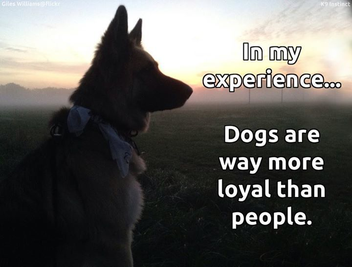 There's a reason why dogs are man's best friend!
