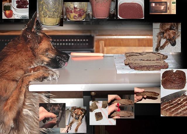 Ricetta tortacrocchino per cani