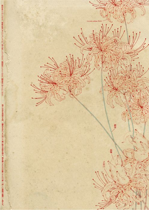 Ink flowersArtists Flower, Botanical Illustration, Japanese Flower Drawing, Red Flower, Japanese Art Flower, Artists Unknown, Botanical Drawing, Art Illustration, Tigers Lilies